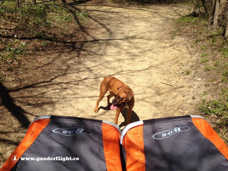 BOB Duallie Jogging Stroller Gander Flight Boxer Dog